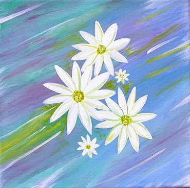 Daisies-flower-art-painting-of-white-daisy-petals-on-a-blue-green-background-by-nz-floral-artist-janice-webb